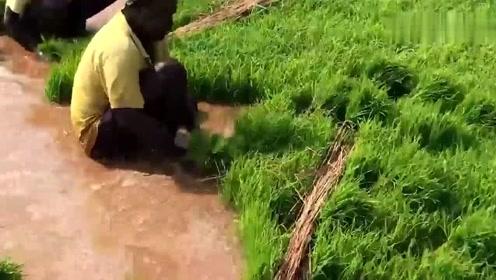 实拍印度农村,看看印度农民怎么种田?跟我们一样吗?