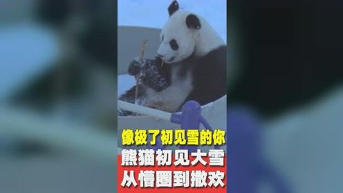 四川熊猫遇上北方大雪 从懵圈到撒欢