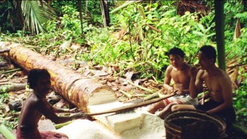 全世界最不正经的树,明明是椰树却产大米,每年要养活几百万人
