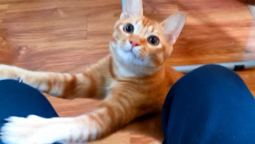 吸吸:橘猫以为开饭了,追着主人要吃的,没想到却被迫营业,真惨