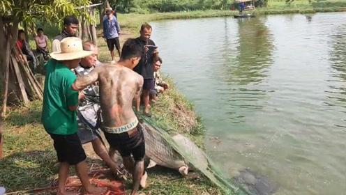 捕获一条罕见的鱼王,三人合力往岸上拉