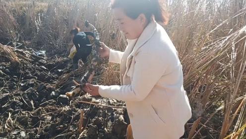 实拍农村鱼塘挖藕,1个多小时才挖3斤左右,你们有什么好方法吗