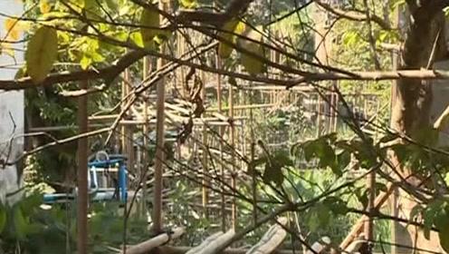 佛山:河涌成死水滋生蚊虫  居民生活受影响