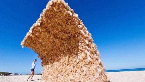 澳洲沙滩出现遮阳墙壁,游客仔细看后,瞬间被吓到腿软!