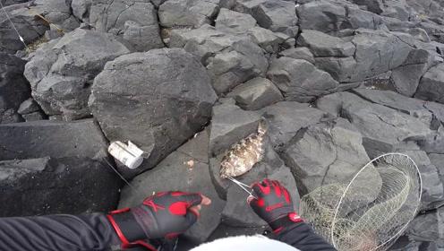 礁石岛上,中钩的这条泥猛鱼够大吧!