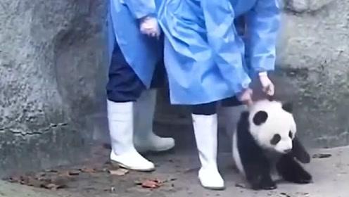 """""""牢底坐穿兽""""真的萌死了!请问,在中国偷熊猫会判几年?"""