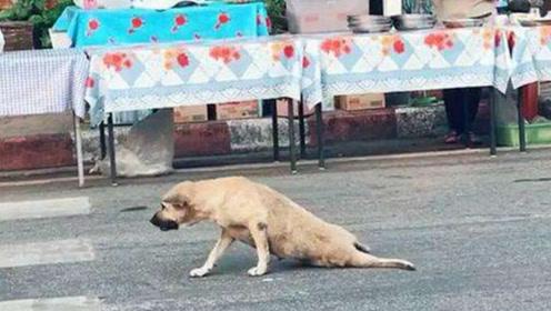 狗狗学会了专业碰瓷,一顿操作猛如虎,没有两根火腿肠不起来