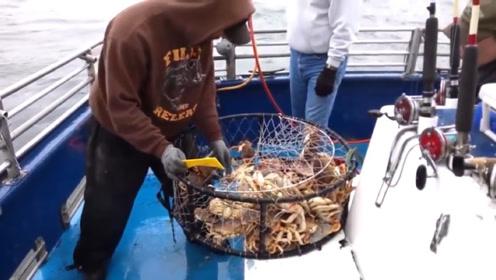 阿拉斯加帝王蟹如何捕捞?每年仅两个月的捕捞时间,场面特别壮观!