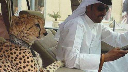 狂徒为啥不对迪拜土豪下手?答案就是这么现实