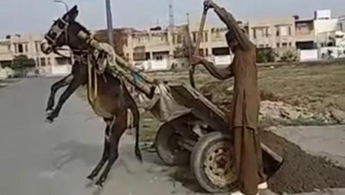 主人给驴子卸货,驴子发怒不干了,镜头拍下搞笑一幕