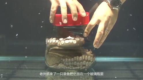 章鱼智商有多高?被放密封罐子却分分钟拧开瓶盖,网友:优秀!