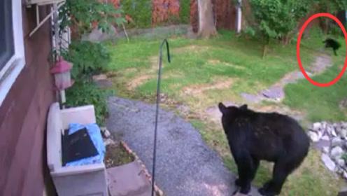 """黑熊闯入民宅偷吃,不料家里有""""恶犬"""",镜头拍下搞笑画面"""