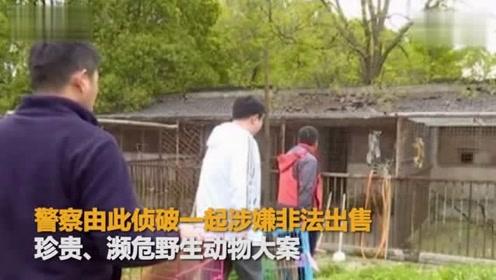 江苏网红直播养猴竟牵出大案:5人被抓 20只猕猴死亡