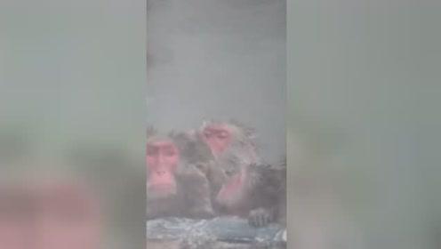 日本北海道猴子泡温泉避寒 表情惬意惹人羡慕