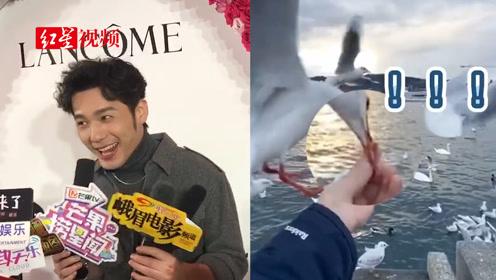白宇成都回应喂海鸥被咬