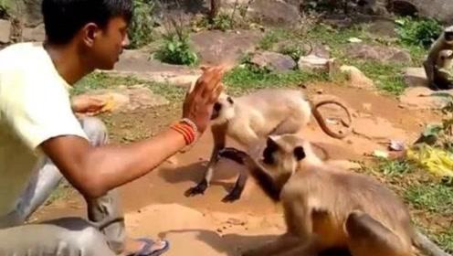 男子一耳光拍翻猴子,下一秒猴子瞬间就懵了, 镜头拍下全过程