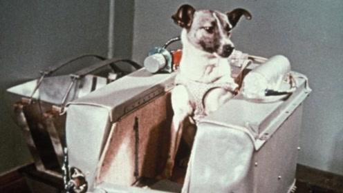 人类曾送流浪狗上太空,结局惨不忍睹,被宇航局隐藏了45年