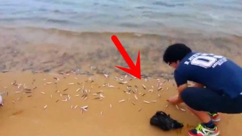 小伙赶海正巧赶上退潮,无数条小鱼被冲上了沙滩,瞬间乐坏!