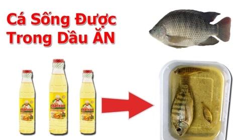老外把活鱼放在食用油中,下一秒鱼都要哭了,比油炸还可怕