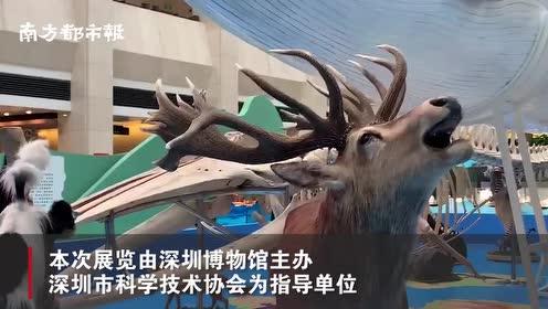 深圳博物馆自然标本征集汇报展开幕,111件珍稀自然标本展出