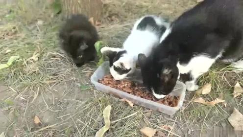 在树下看到3只流浪猫 ,炸毛的黑猫好可爱,想拐回家喂小鱼干