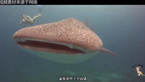 这种鲨鱼大家一定没见过!鲨鱼千千万万种,这么丑的还真少见!