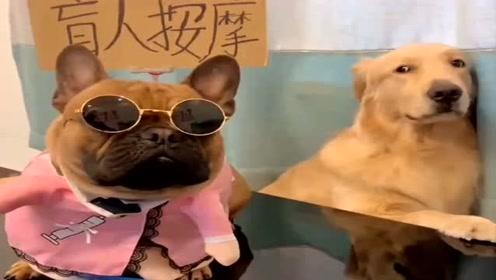 狗狗去盲人按摩,看哇噻如何回答它的,接下来的对话让人哭笑不得!