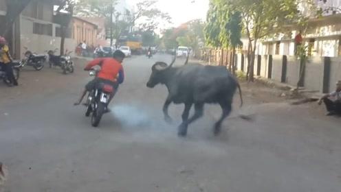 男子在公牛面前轰油门,激怒公牛追赶自己,心疼它一秒钟
