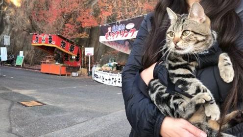 趣生活:小猫咪和主人去旅行
