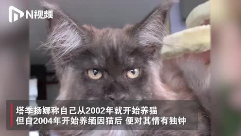 """俄罗斯猫科医生培育出""""人脸""""缅因猫,神色极似人类"""