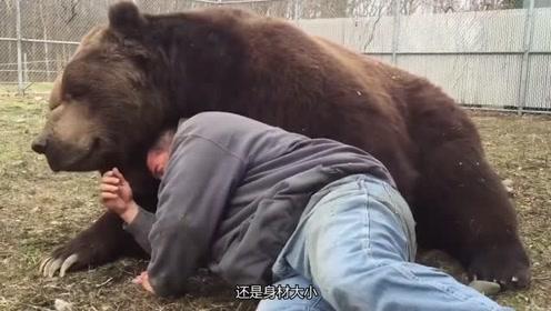 大棕熊趴在主人背上,嘤嘤连声撒娇,主人心中有苦说不出