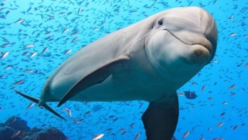 鲨鱼什么都吃,为什么偏偏不吃海豚?一起了解下