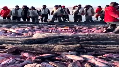 太震惊了,第一次见这样的捕鱼现场,一网鱼就是几万斤!