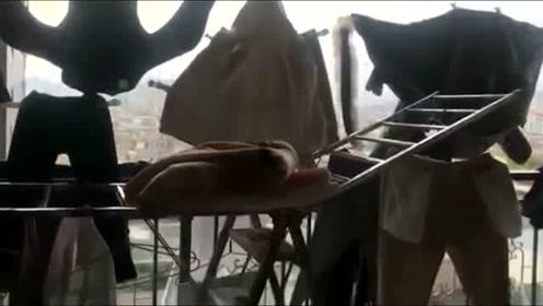我妈叫我收衣服,去阳台看到这一幕,我好想哭,太能作妖了!