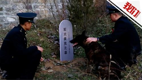 """16年火箭军军犬训导员生涯的最后一天:专门去公墓前祭奠""""战友"""""""