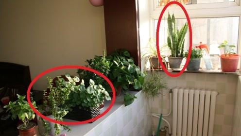 风水先生:家中一定要养这3种花,财运不请自来,有钱人家早知道!