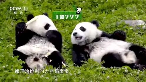 太治愈啦!大熊猫宝宝的吃喝爬树日常,每个电脑前的你都羡慕吧