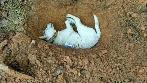 为什么狗狗死后不能埋?原来不是迷信,竟有科学依据!
