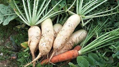 医生提醒:白萝卜千万不能这么吃,不仅营养全无,还很容易伤身