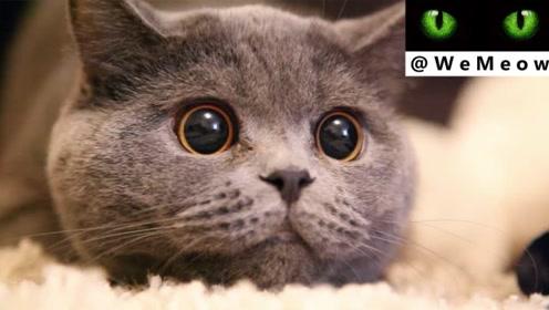 猫咪的瞳孔为什么一会大一会小?真相让人目瞪口呆