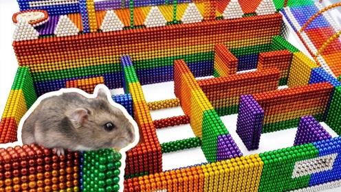 """主人闲来无事,用巴克球给小仓鼠建""""迷宫"""",建造过程太解压了"""