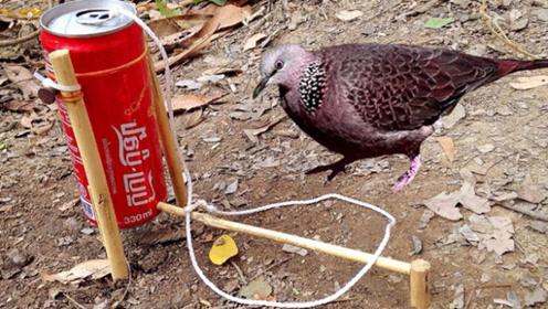 喝光的可乐罐不要丢,说不定还可以用来捉鸟,镜头拍下全过程!