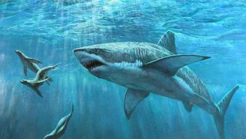 鲨鱼为什么不吃海豚?鲨鱼: 真的追不上, 追上了也打不过!