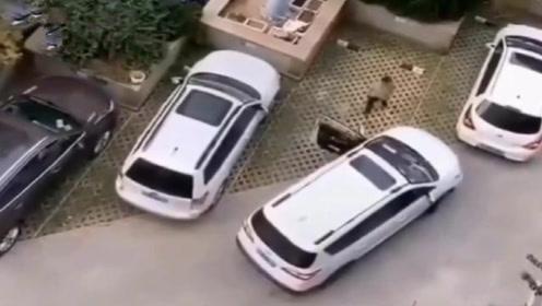 女司机经过多次下车仔细观察,已确定车位太小,停不进去~