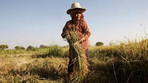 联合国:亚太地区近5亿人营养不良,太平洋岛屿肥胖率最高