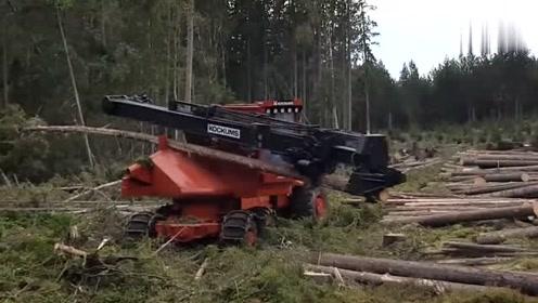 这机器厉害了,直接就把树干削得很干净!