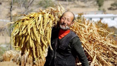 农民的好日子要来了!这几项福利改造后,农民乐开花!