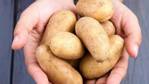 发芽的土豆可不要再吃了,不然小命都没了