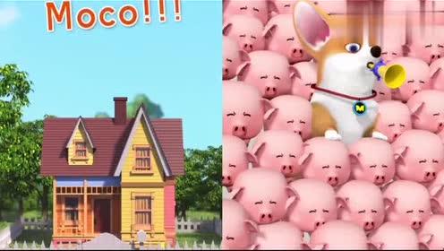飞狗MOCO:主人挠柯基痒痒!