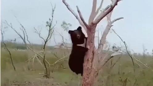 开车途中偶遇一只狗熊,我就冲它说了两句,它也不理我吓的直接跑了!